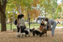 An enclosed off-leash dog area is seamlessly integrated within the existing trees and drifts of planting.